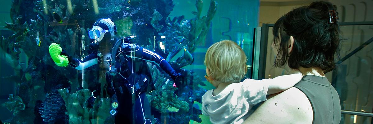 RCH Fish tank